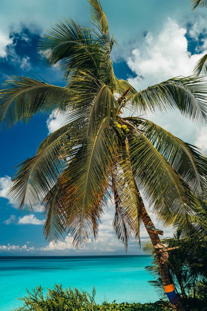 island exuma bahamas palms