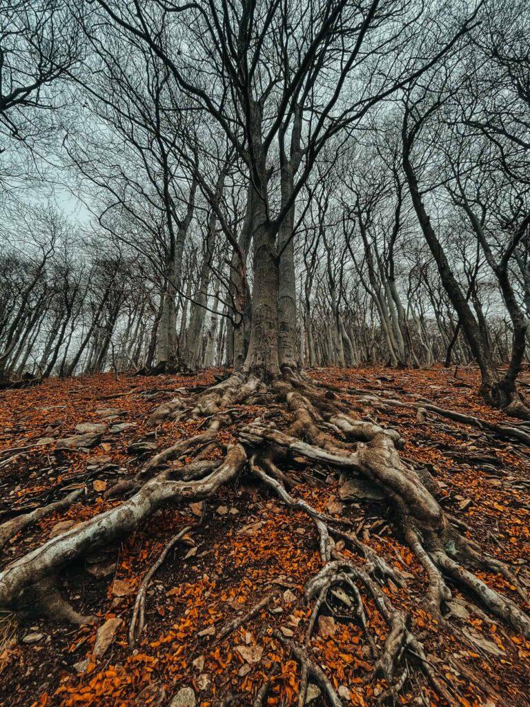 stromy_ceske_stredohori